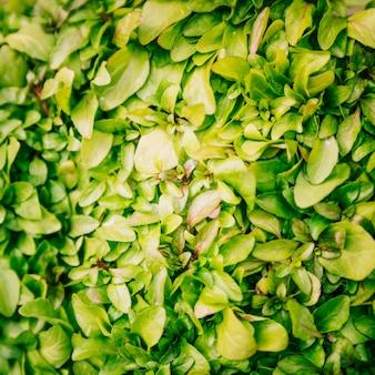 Quadro completo de folhas verdes frescas fundo