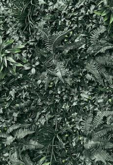 Quadro completo de plantas verdes