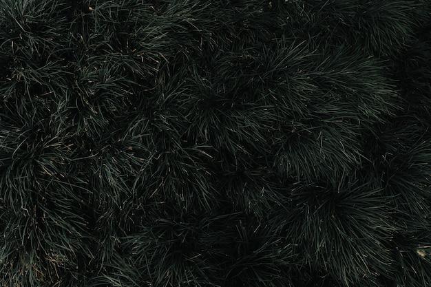 Quadro completo de uma árvore perene