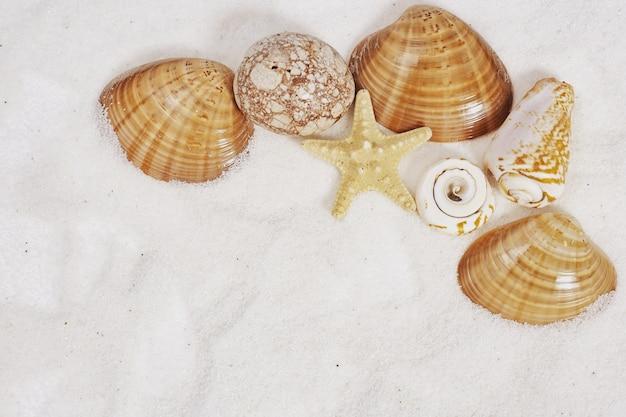 Quadro conchas, estrelas e pedras na areia