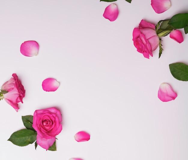 Quadro criativo com lindas rosas e pétalas