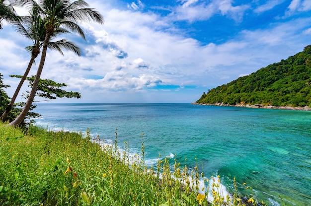 Quadro de bela flor com palmeiras na bela baía, vista panorâmica do destino de viagem de phuket