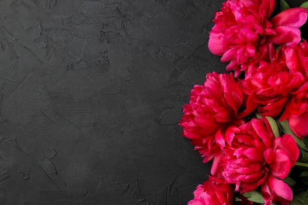 Quadro de belas peônias de flores rosa brilhante em um fundo preto de grafite. vista do topo. espaço para texto