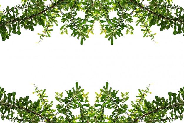 Quadro de borda superior de folhas e borda inferior em um fundo branco