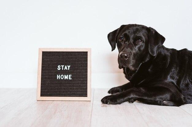 Quadro de carta com mensagem de estadia em casa. além de labrador preto lindo. conceito pandêmico 2019 de coronavírus pandêmico