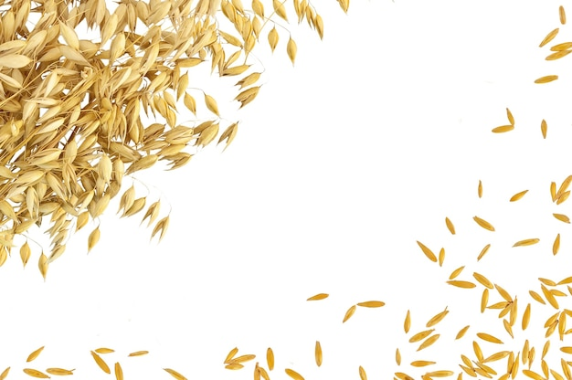 Quadro de caules e grãos de aveia isolados no fundo branco