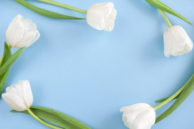 Quadro de cinco tulipas brancas sobre fundo azul, com espaço de cópia.