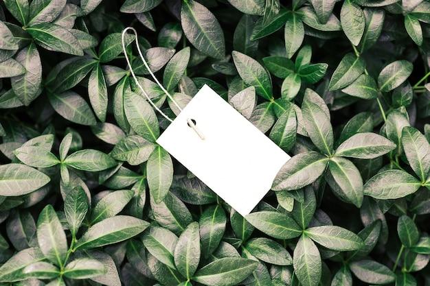Quadro de composição de layout criativo feito de folhas verdes de pervinca com textura bonita com etiqueta de cartão branco ou marca para roupas em um cordão, layed plano e espaço de cópia.