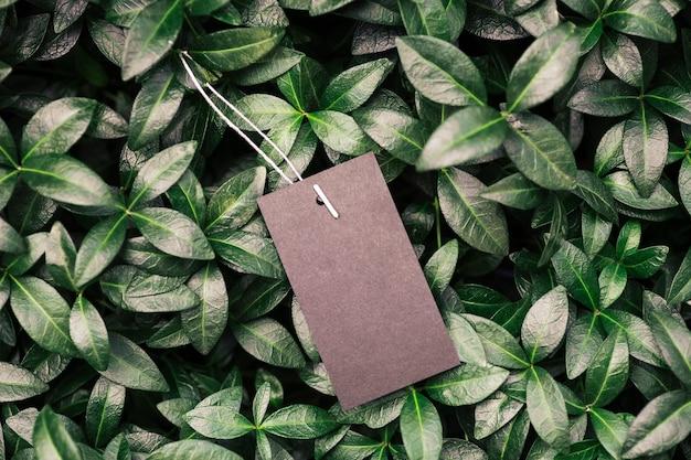 Quadro de composição de layout criativo feito de folhas verdes de pervinca com uma bela textura com um bl ...