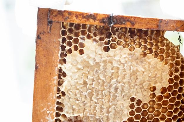 Quadro de favos de mel com mel fresco.