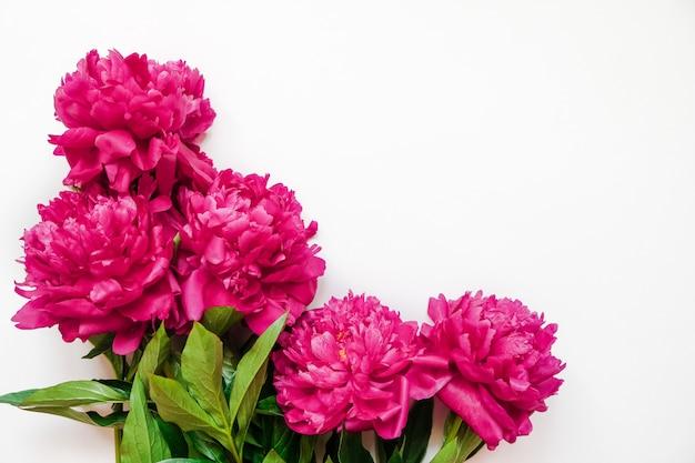 Quadro de flor com frescos ramos de peônia rosa isolado no branco com espaço de cópia