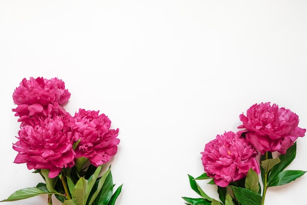 Quadro de flor com frescos ramos de peônia rosa isolado no fundo branco, com espaço de cópia