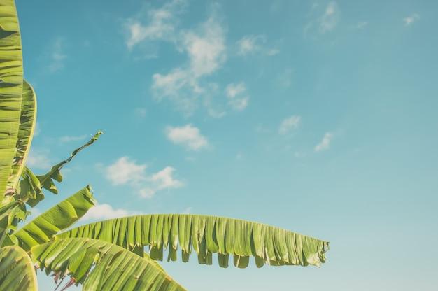 Quadro de folha de bananeira no fundo abstrato do céu azul