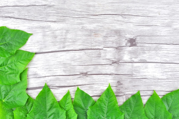 Quadro de folha verde em fundo de madeira