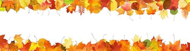 Quadro de folhas coloridas de outono isoladas no fundo branco