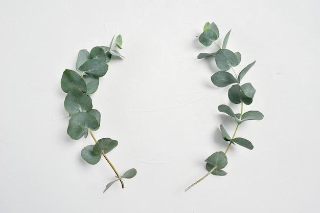 Quadro de folhas de eucalipto em fundo branco, com lugar para o seu texto