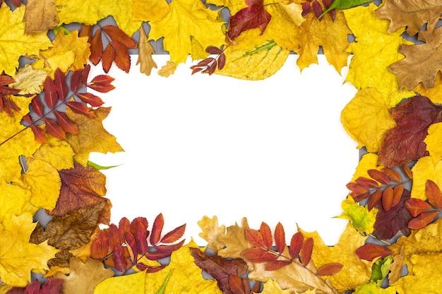 Quadro de folhas de outono coloridas com cartão de papel branco plano plano outono fundo de ação de graças