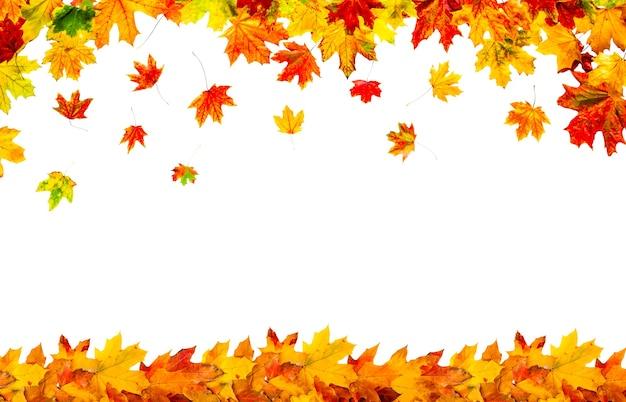 Quadro de folhas de outono coloridas isolado no fundo branco