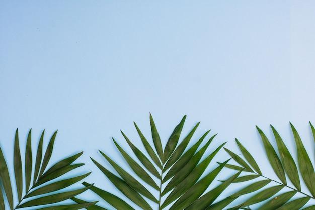 Quadro de folhas de palmeira tropical sobre fundo azul. configuração plana
