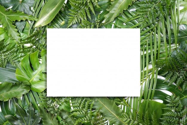 Quadro de folhas de palmeira verde fresco com espaço de cópia