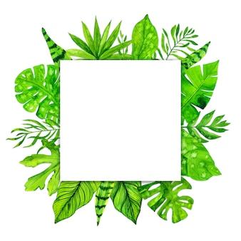 Quadro de folhas exóticas tropicais em fundo branco. ilustração em aquarela