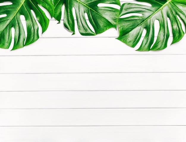 Quadro de folhas tropicais monstera em um fundo branco de madeira com espaço para texto. vista superior, configuração plana.