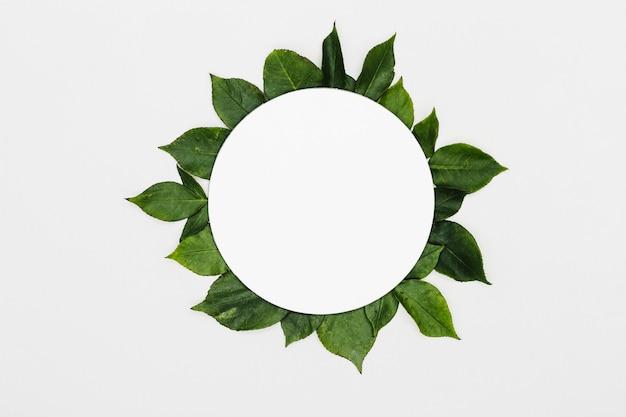 Quadro de folhas verdes de vista superior