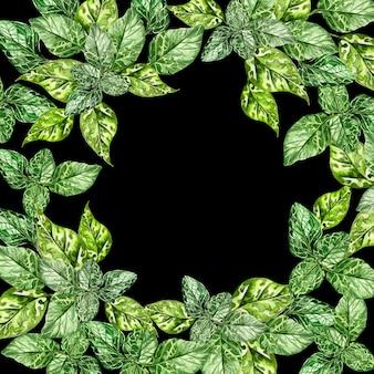 Quadro de folhas verdes em aquarela isolado em fundo preto