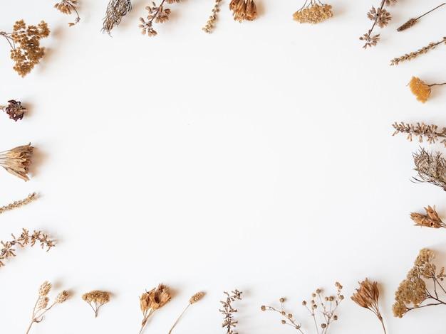 Quadro de outono de diferentes plantas e flores secas em fundo branco. vista do topo. postura plana. copie o espaço
