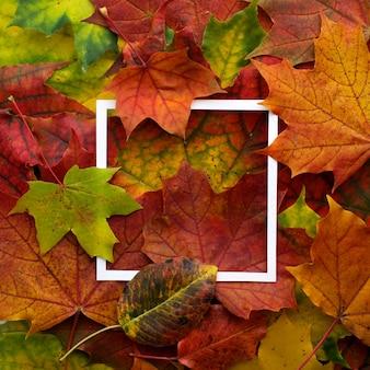 Quadro de outono feito de folhas com moldura branca.