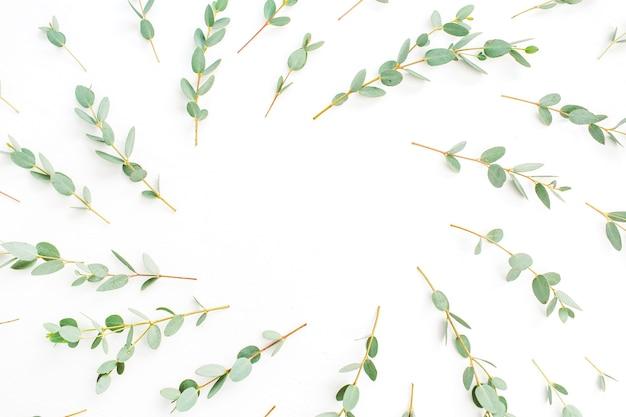 Quadro de padrão de ramo de eucalipto com espaço para texto em fundo branco. camada plana, vista superior