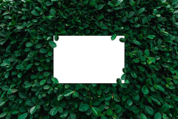 Quadro de papel branco no fundo da parede de folhas verdes
