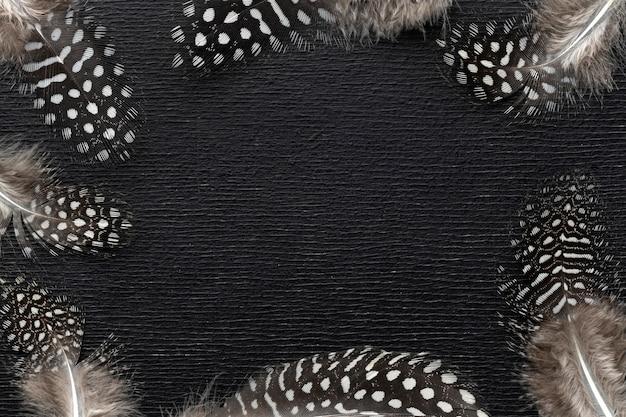 Quadro de penas de pássaro com vista superior