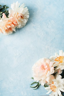 Quadro de peônia branca e rosa em fundo azul, cópia espaço, vista superior, vertical