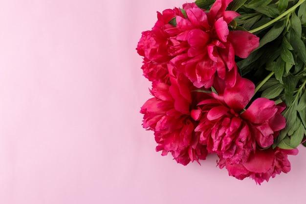 Quadro de peônias lindas flores rosa brilhante em um fundo rosa suave. vista do topo. espaço para texto