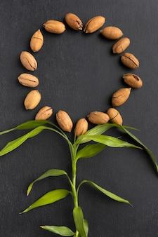 Quadro de sementes circulares de vista superior