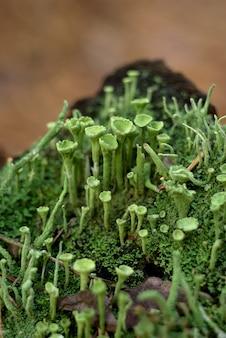 Quadro decorativo natural de musgo verde, cogumelos, folhas de samambaia e maçãs vermelhas silvestres.