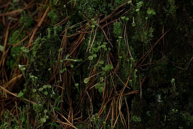 Quadro decorativo natural de musgo verde, cogumelos, folhas de uma samambaia.