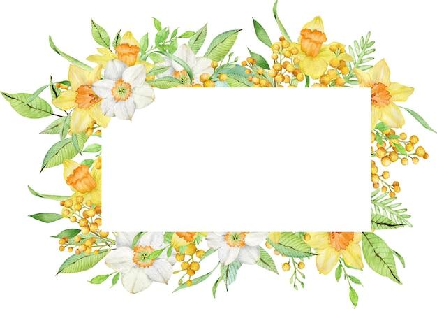 Quadro em aquarela com flores amarelas da primavera e folhas verdes narcisos e ramos de mimosa