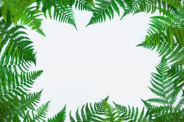 Quadro feito de folhas de samambaia, folhas de palmeira sobre fundo claro. folha tropical abstrata, design criativo na moda.