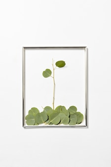 Quadro festivo com composição de planta de eucalipto de folhas caídas em uma parede cinza clara, copie o espaço.