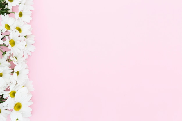 Quadro floral de vista superior com fundo rosa
