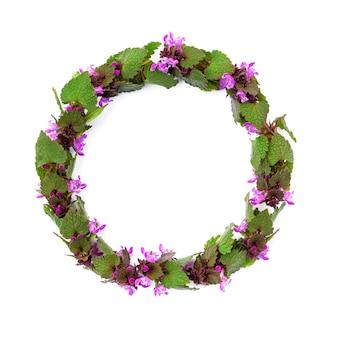 Quadro isolado de plantas de campo de primavera com flores cor de rosa em uma forma redonda em um fundo branco