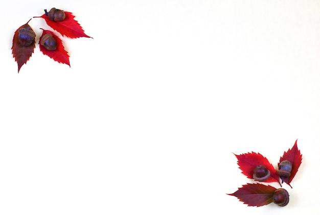 Quadro outonal do outono das folhas e das castanhas caídas em um fundo branco.