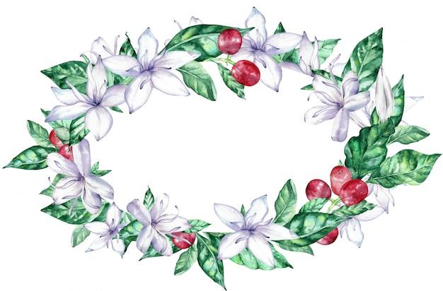 Quadro oval da aguarela com as flores brancas do café e as bagas vermelhas.
