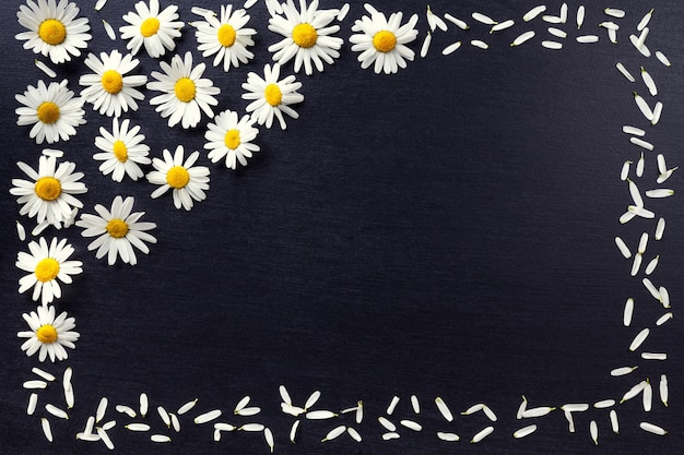 Quadro retangular das margaridas brancas em um fundo preto. o teste padrão floral com espaço da cópia coloca horizontalmente. flores vista superior.