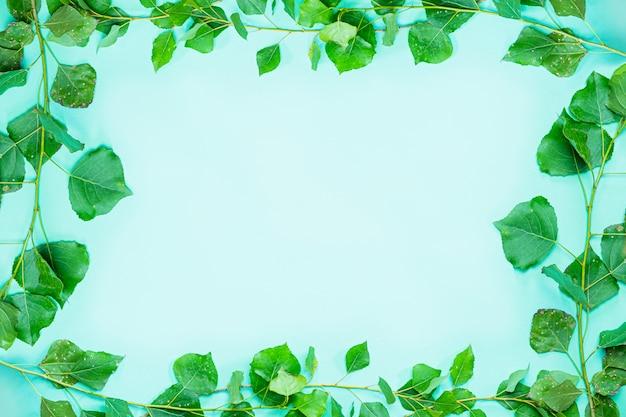 Quadro verde composto por ramos de popplar verde fresco e fundo de quadro de folhas