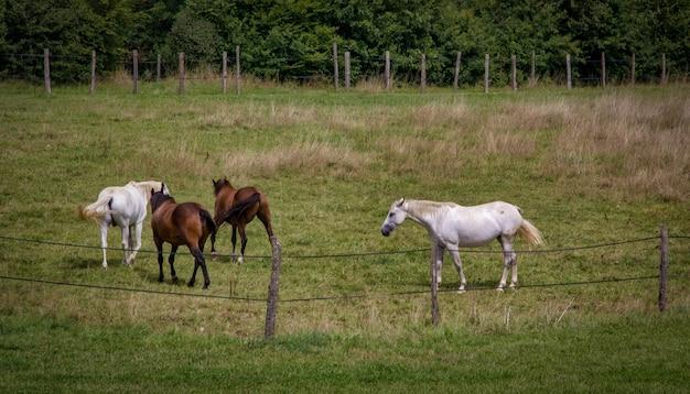 Quatro cavalos em um campo