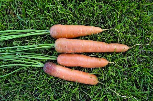 Quatro cenouras laranjas em um fundo de grama verde