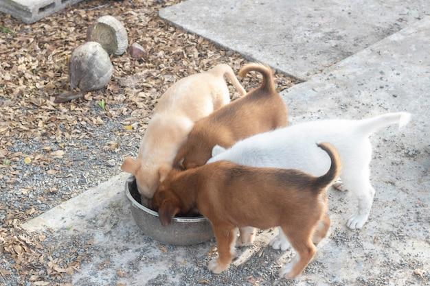 Quatro filhotes comendo comida de cachorro em uma tigela